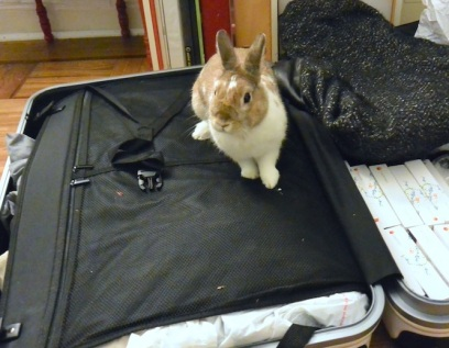 Bun's Security Check on Arrival