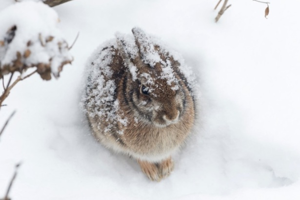 bunnystayingstronginthesnow